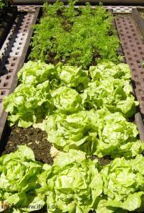 Kompost als Düngemittel für den privaten Garten